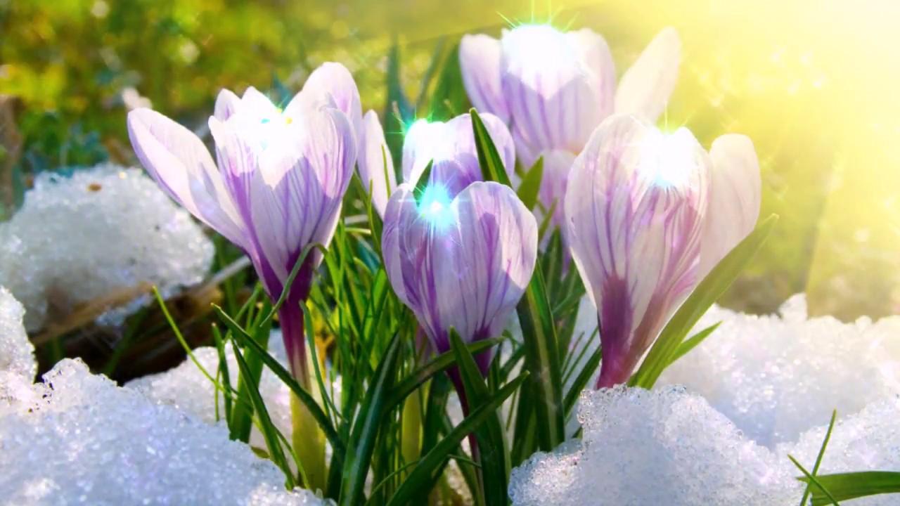 разотрите сахаром картинка скоро весна на телефон книги дикой