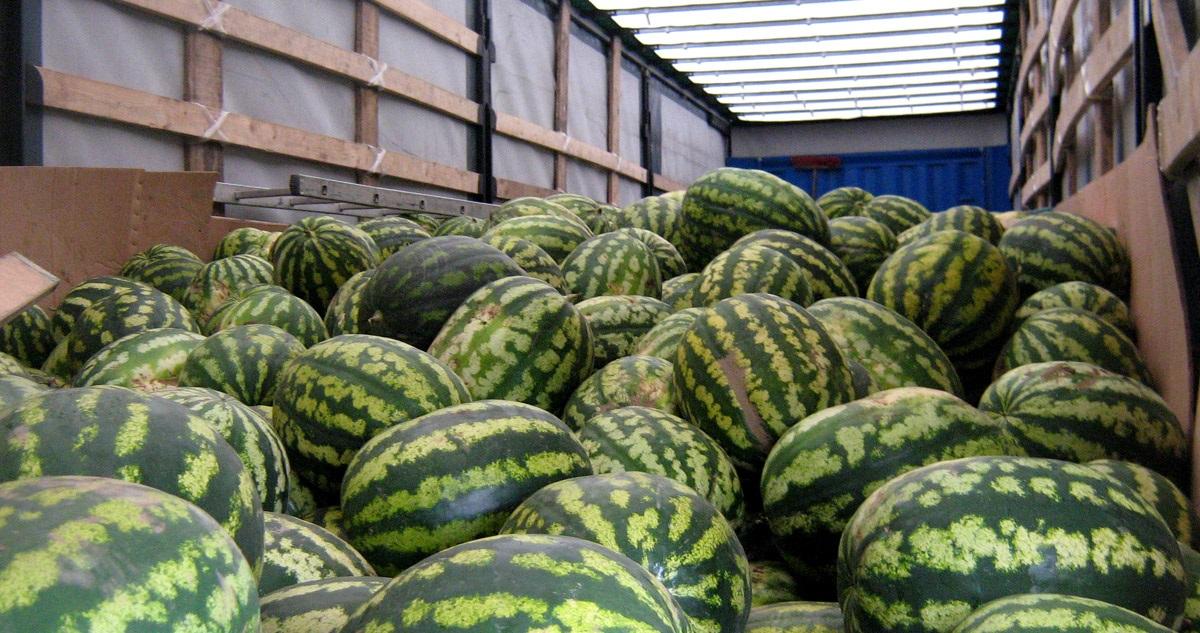 Более 200 тонн небезопасной растительной продукции пытались ввезти в Алтайский край из Казахстана и Кыргызстана