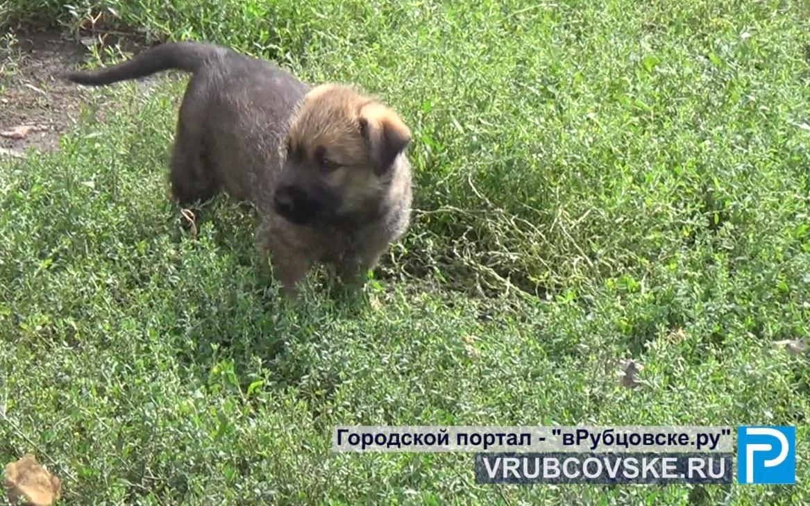 В Рубцовске обсудили проблему бездомных животных