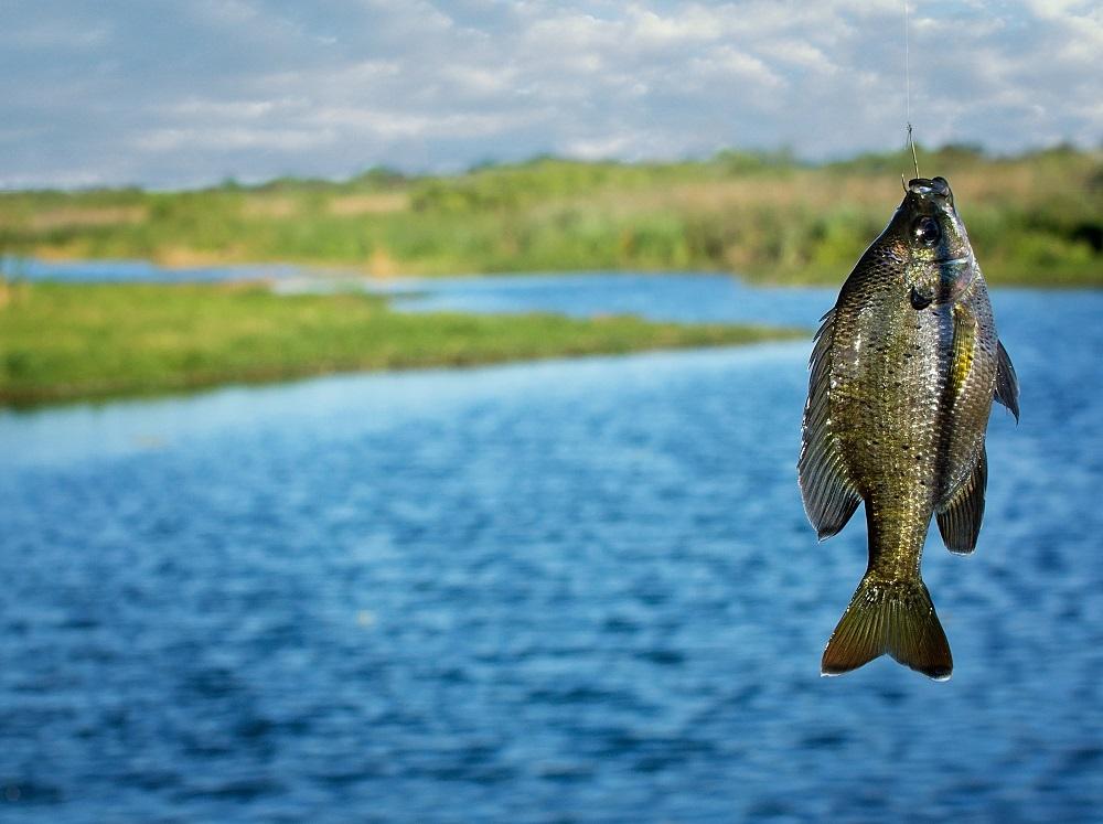 Рубцовский участок ГИМС: правила безопасности на рыбалке