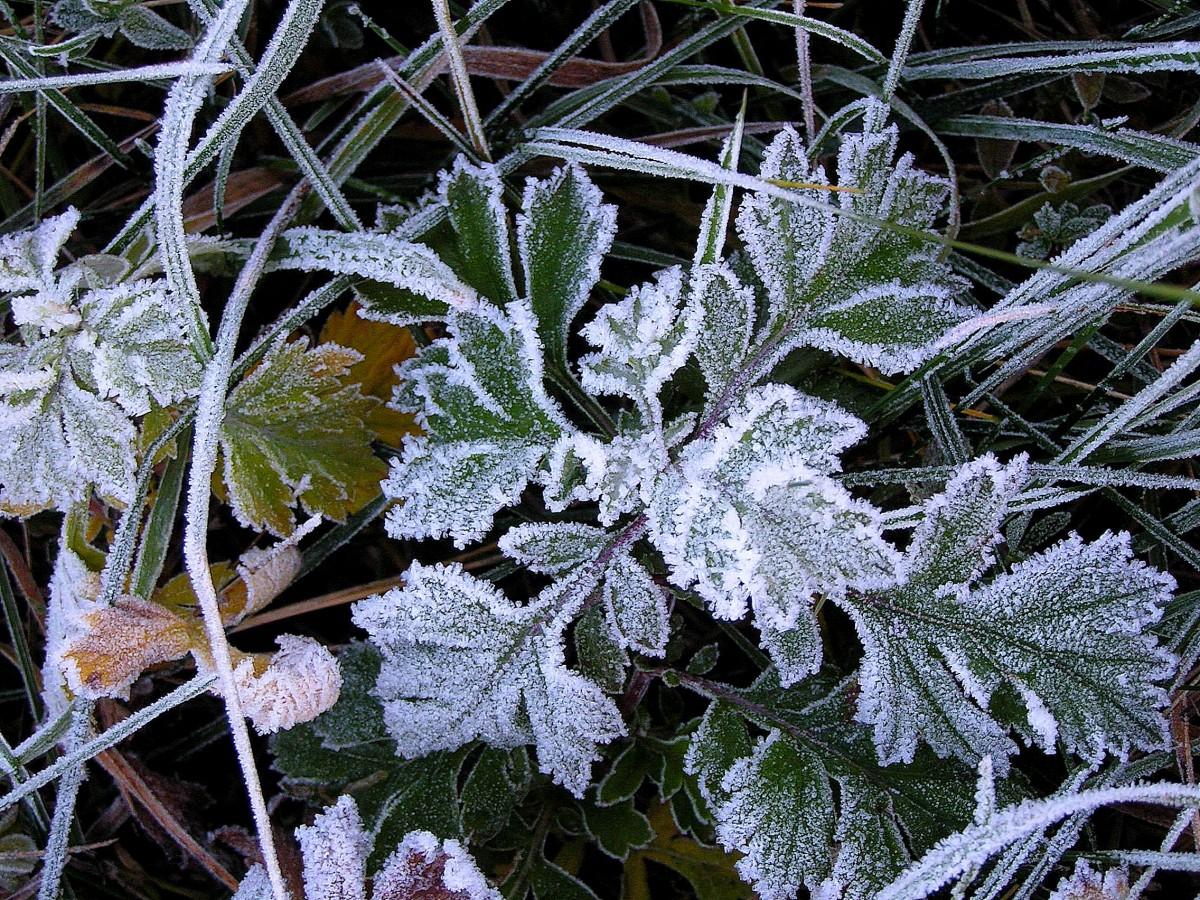 В северных районах Алтайского края прогнозируют заморозки до -1 градуса