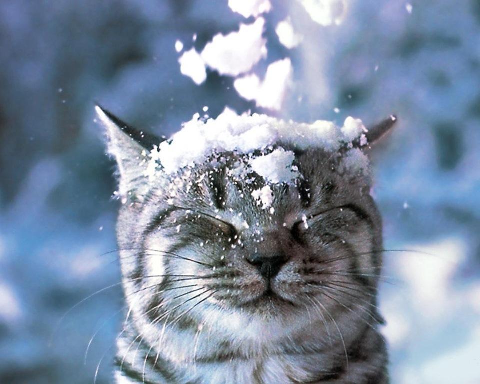 Стало известно, какой будет зима в Алтайском крае