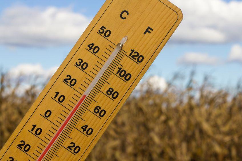Потепление до +20 градусов ожидается в Алтайском крае
