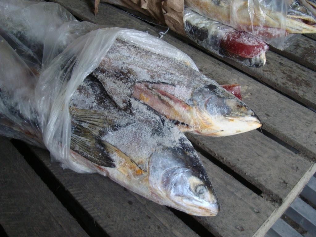 Более 20 тонн свежемороженой рыбы не пустили в Алтайский край