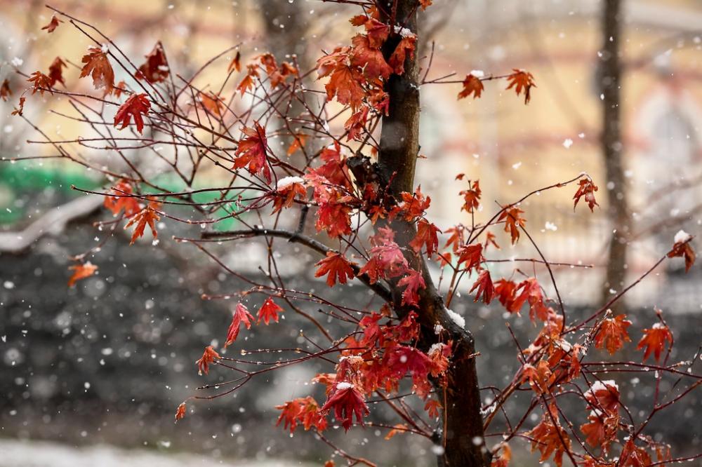 Похолодание и временный снежный покров обещают синоптики в Алтайском крае