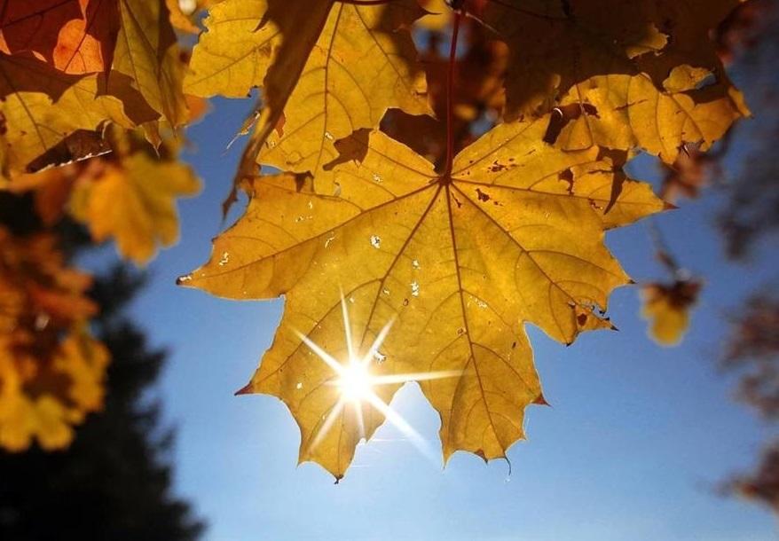 До +5 градусов тепла ожидается в Алтайском крае сегодня
