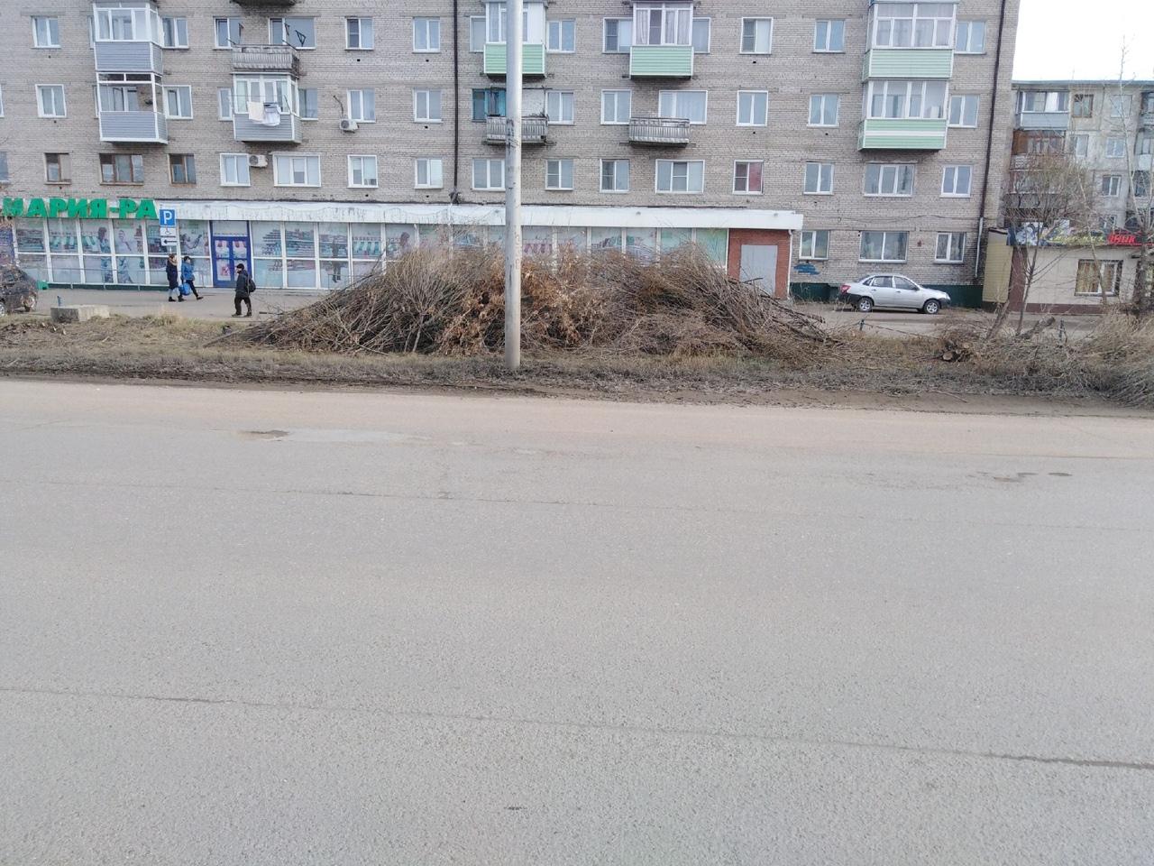В Рубцовске вторую неделю не могут убрать кучу спиленных деревьев