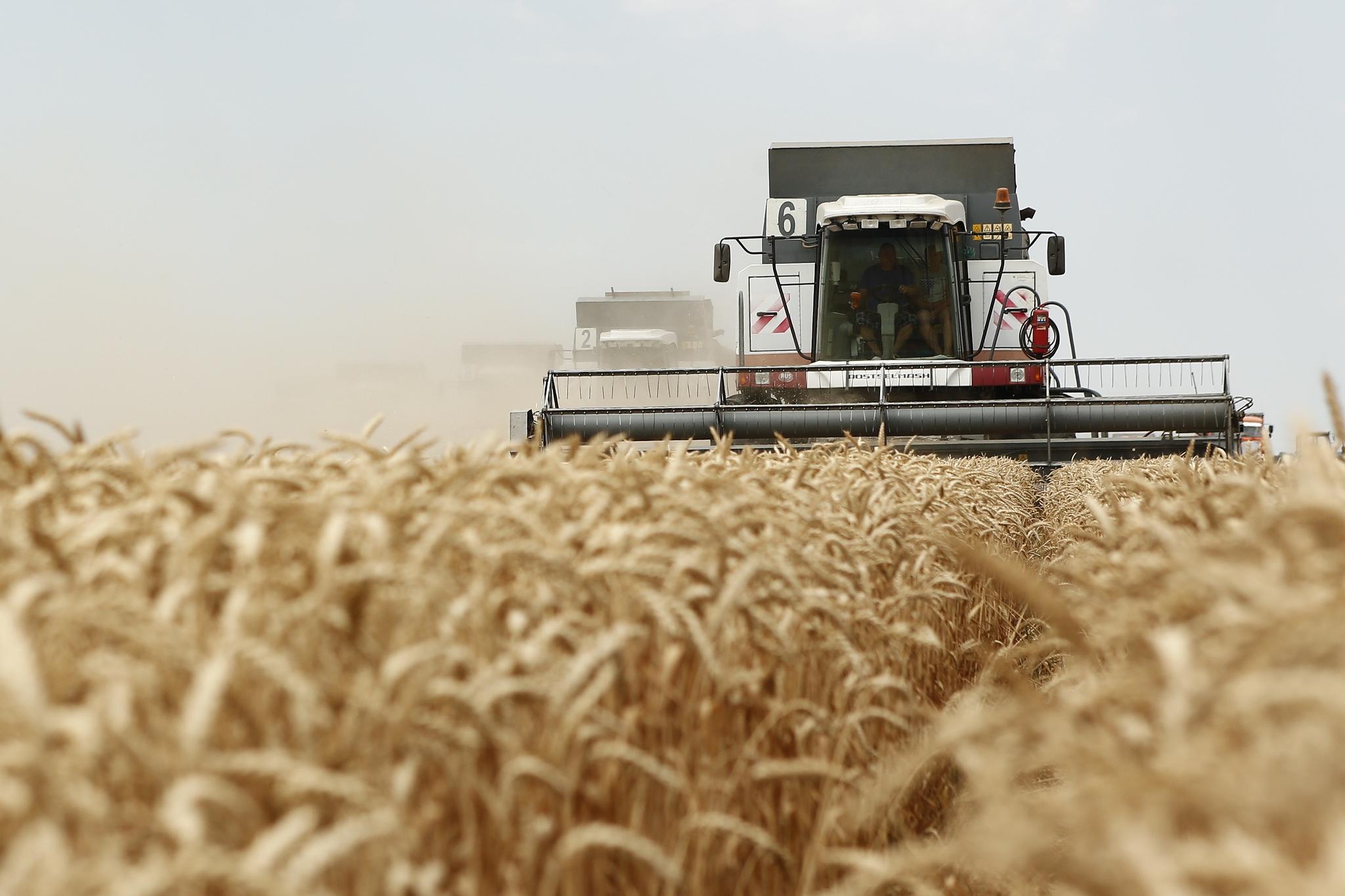 110 тыс. тонн зерновой продукции экспортировано из Алтайского края в октябре 2019 года