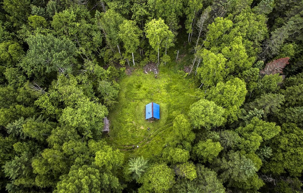Большая часть пересечений земельных участков с лесными устранена в регионе алтайским Росреестром