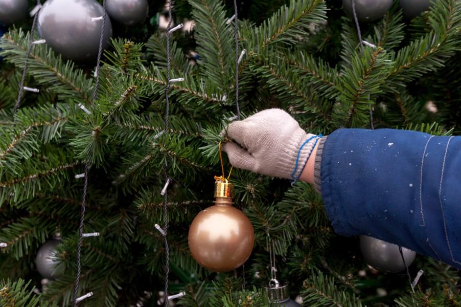На новогодние праздники в Алтайском крае планируют реализовать 18 тысяч деревьев