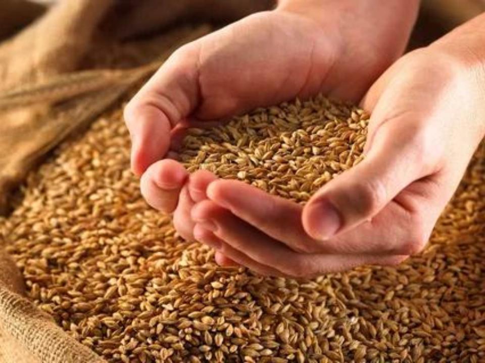 Около 160 тыс. тонн зерновой продукции экспортировано из Алтайского края за ноябрь 2019 года