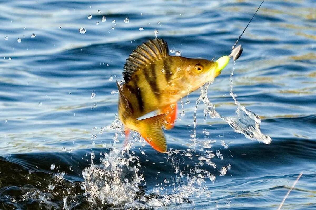 Рыболовные картинки на рабочий патенте говорится