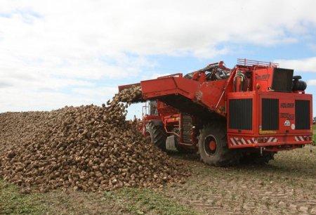 Неменее 18 тыс. тонн сахара уже произвели вАлтайском крае