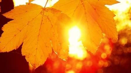 День осеннего равноденствия— 2016: дата, когда праздновать осенины, приметы, поздравления